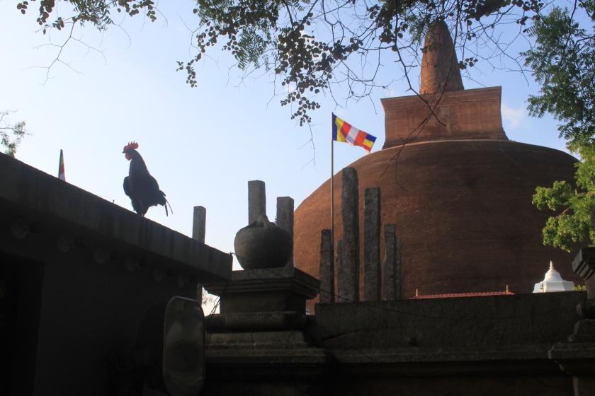 Cockerel and dagoba, Anaradhapura