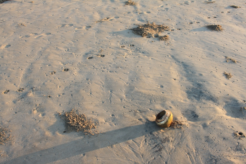 Dikwela beach