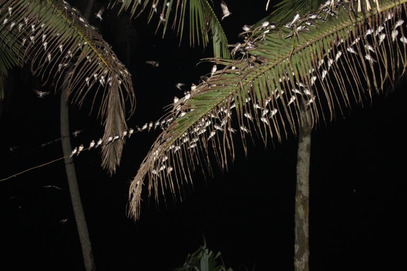 Swallows, Talpe