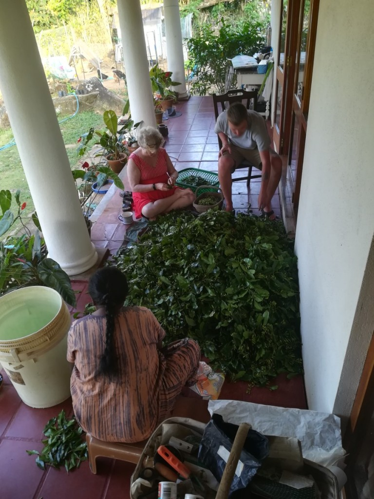 cleaning on the veranda - Sally, Rani and Jake