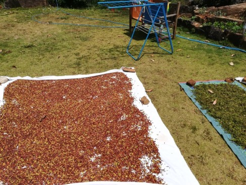 Cloves drying and clothes drier
